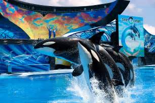 Sea World Tips For An Unforgettable Birthday Celebration At Seaworld