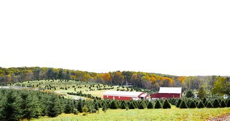 baltimore christmas tree farm cut your own trees montgomery md