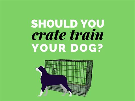 how should you crate a should you crate your cruisin canines