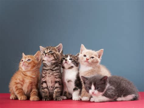 wallpaper kucing cantik search results for video lucu calendar 2015