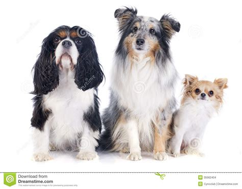 three dogs three dogs stock images image 35562404