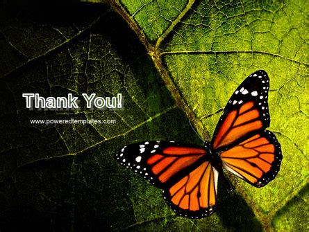 butterfly theme google slides butterfly effect powerpoint template backgrounds 03432