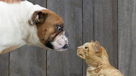 cats vs dogs vs cat what pet preference says about you abc news