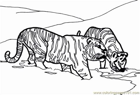 coloring pages lions tigers printable coloring page lion tiger mammals 565887