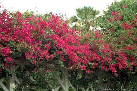 flowering shrubs in florida flowers