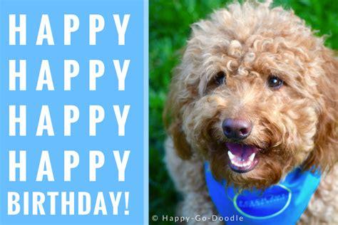 fun birthday quotes    happy birthday dog