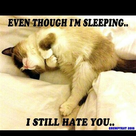Grumpy Cat Sleep Meme - 92 best my grumpy cats 2014 through 2018 images on