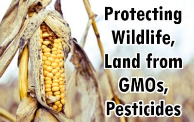 How To Detox Your From Gmos And Pesticides by Filed To Protect Wildlife Forests From Gmos