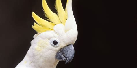 marlisse cepeda cockatoo can t stop repeating arguments of her divorced