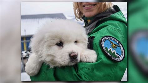 italian avalanche puppies wcnc italian emergency crews rescue 3 dogs after avalanche