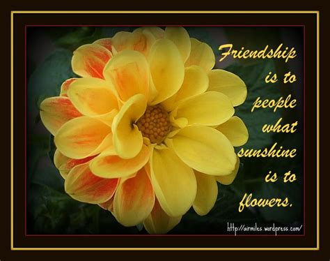 Yellow flower friendship quotes mightylinksfo