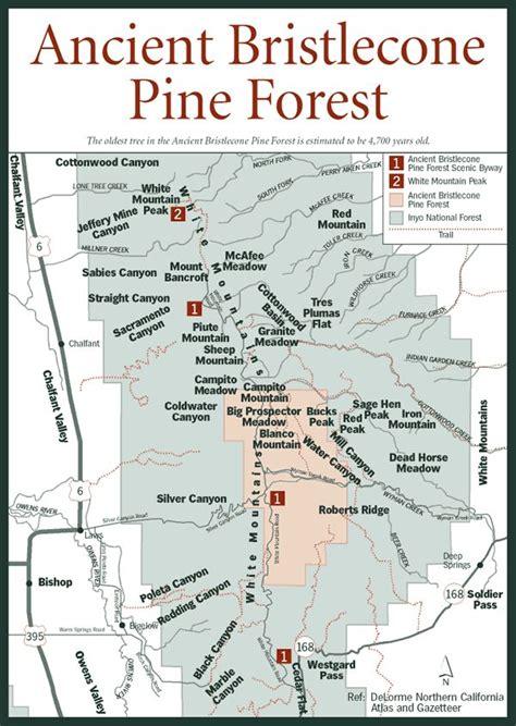 bristlecone pine tree california mystic 25 best ideas about bristlecone pine on trees