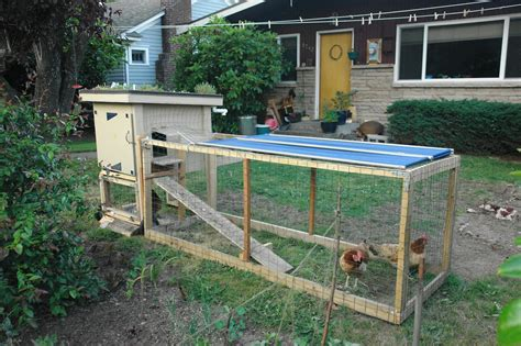 Raising Chickens At Home ? The Quick n' Dirty Guide