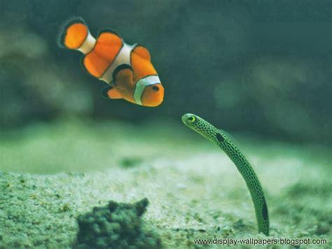 wallpaper for desktop fish wallpapers download beautiful fish wallpapers for desktop