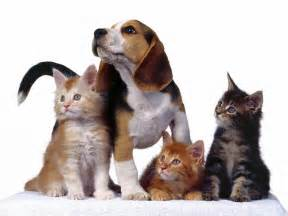 Cats and dogs hd dog and cats wallpaper hd 32 dog and cat