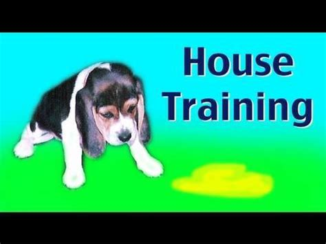 house training a shelter dog how to litter potty train a puppy dog funnydog tv