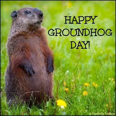 groundhog day saying groundhog day