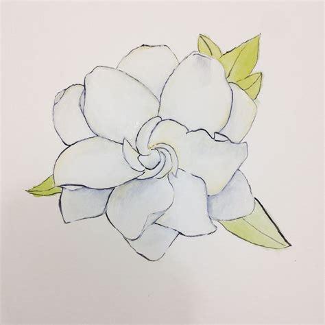 Gardenia Flower Drawing Gardenia Flower Drawings Www Imgkid The Image Kid