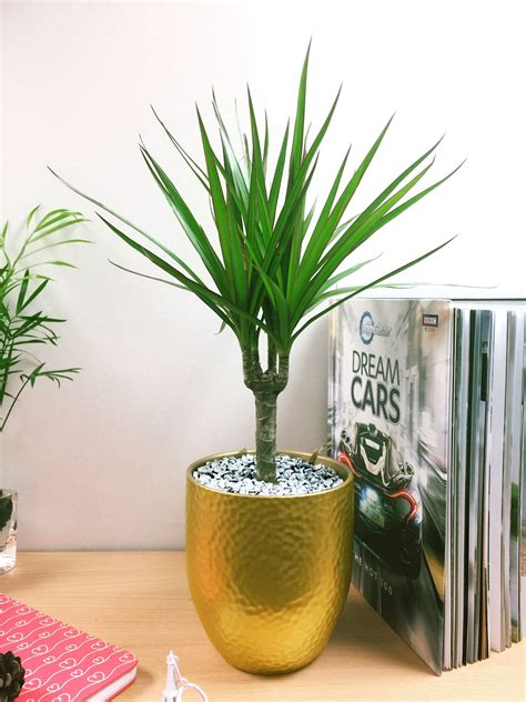 piante da davanzale 1 casa popolare pianta in vaso d oro in ceramica davanzale