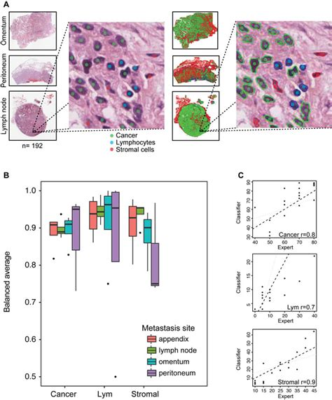 spatial pattern analysis program for categorical maps oncotarget similarity and diversity of the tumor