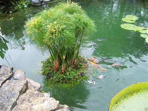 details sur  floating island pond jardiniere plant koi