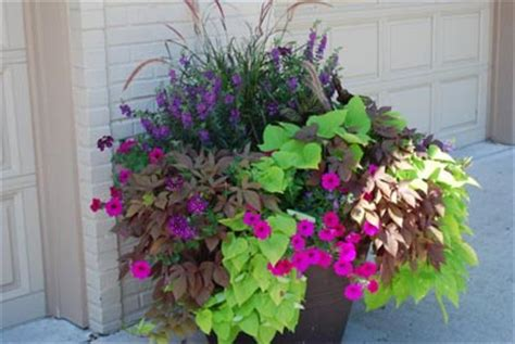 Planter Box Ideas For Sun by 1000 Images About Flowers Plants Container Gardening On Container Garden Container