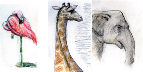 Drawing Zoo Animals by File Zoo Animal Study By Thefluffyshrimp Jpg Wikimedia