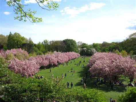 Sakura Matsuri Cherry Blossom Festival In Nyc Cherry Blossom Botanical Garden