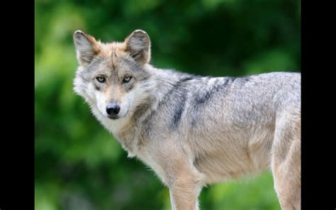 5 Animales Que Deberias Ver by 5 Animales Que En 2014 Seguir 225 N En Peligro De Extinci 243 N