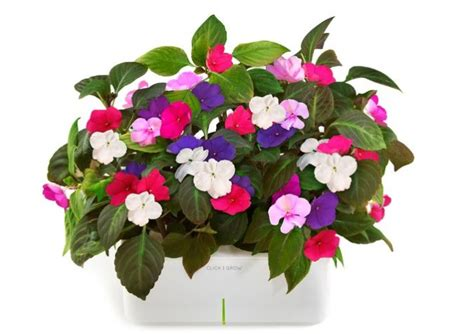 indoor plants that don t need a lot of light indoor plants that don t need light pet friendly house