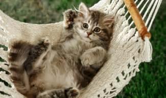 cat hammock 16 pictures funny cat dompict com