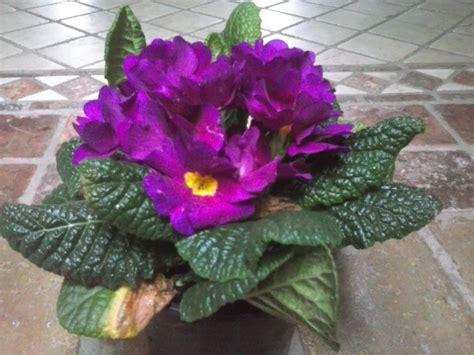 imagenes flores de jardin fotos y nombres de flores de jardin