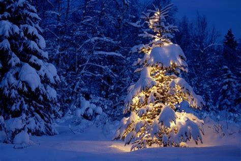 arboles de navidad con nieve 193 rbol de navidad cubierto de nieve 72347
