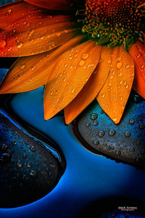 complementary color definition 24 powerful images with complementary colors