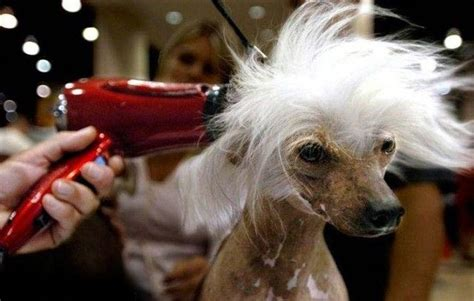 Hair Dryer For Dogs drying hair hair of the