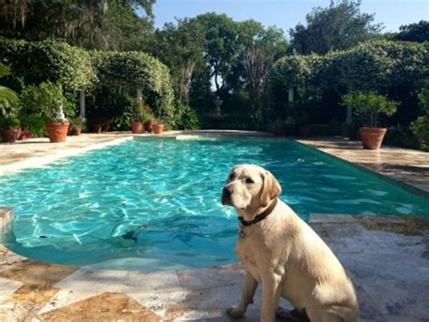 airbnb for dogs rover an airbnb for dogs blogs