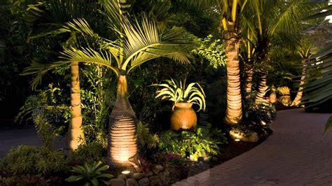 landscaping sarasota florida  tropical palm trees youtube