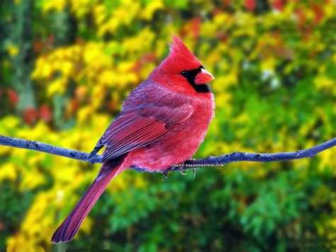 beautiful birds beautiful cool wallpapers