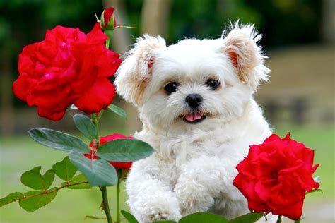 puppies and flowers pin puppy flower wallpaper and photos on