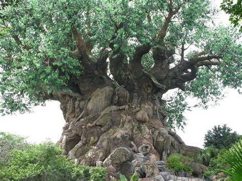 tree of life the gallery for gt lion king tree of life