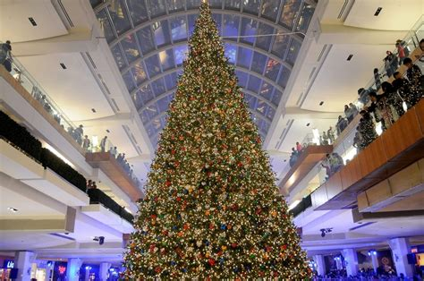 a holiday giant galleria s massive christmas tree