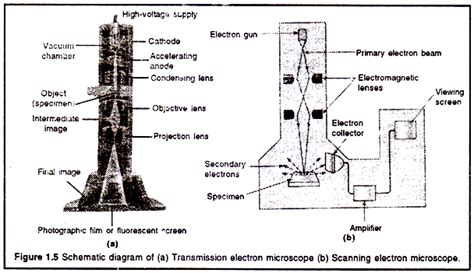 diagram of electron microscope electron microscope em principles and types