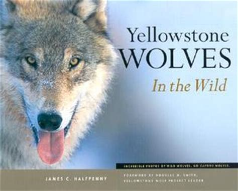 wolves picture book yellowstone wolves in the by c halfpenny