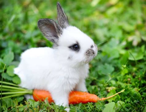 new year rabbit facts rabbit facts a pet bunny