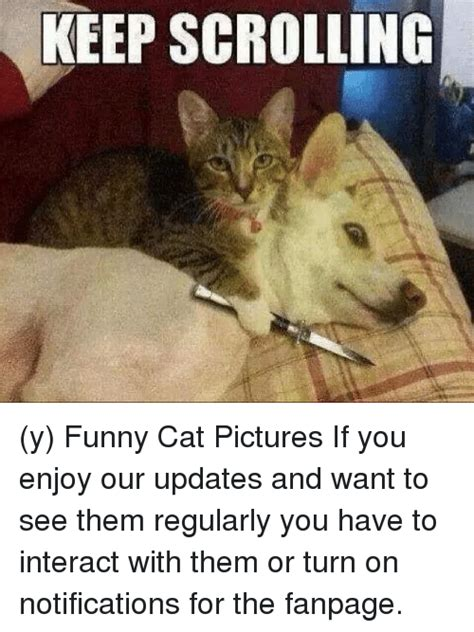 Turn On Memes - 25 best memes about cat pictures cat pictures memes