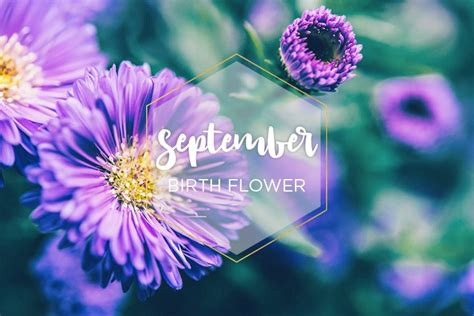 september birthstone color and flower flowers ideas for