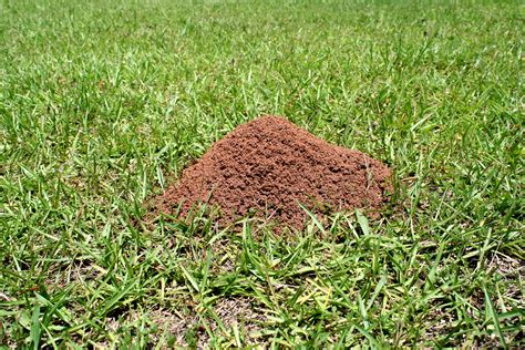 ant bed are fire ants invading your lawn or garden tallapoosa