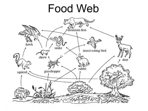 coloring pages of food webs seal food web coloring pages seal best free coloring pages