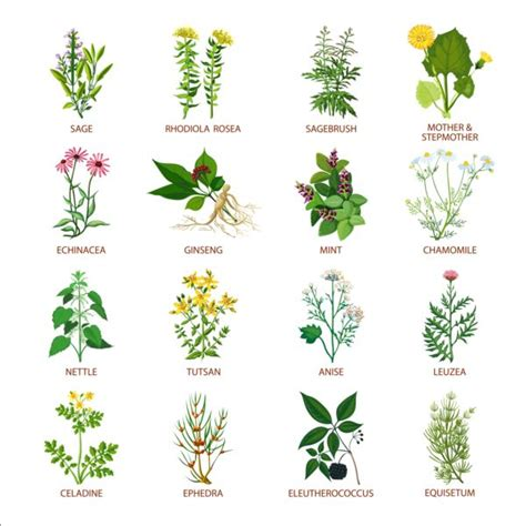 different types of garden plants different plants vector illustration set vector plant