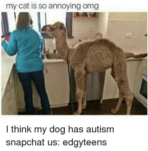 i think my has autism dogs and snapchat memes of 2016 on sizzle